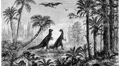 Immagine dinosauri